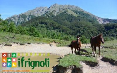 Il Bioparco dei Frignoli riapre al pubblico tutti i giorni, con grandi acquari, percorsi avventura e aree attrezzate per i turisti