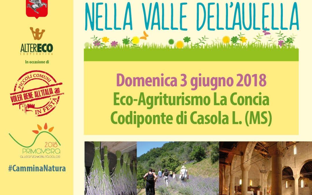 Tra Erbe & Storianella Valle dell'Aulella • Escursione 3 giugno 2018 Codiponte di Casola L.
